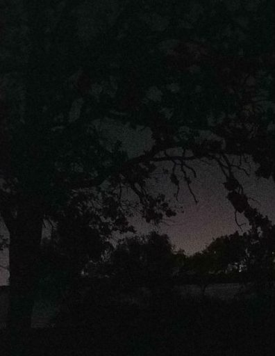 Dark, almost indistinguishable tree silhouette against pre-dawn sky. Photo taken by Gaye Lyn on the morning after the first visit of her Veterans Air family trip.