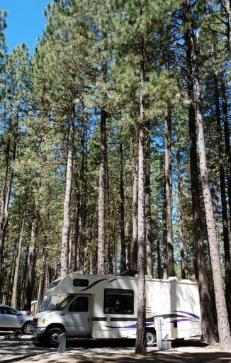 My white RV with purple and charcoal swooshing decals looks dwarfed among the exceptionally tall, telephone-pole-thin trunks supporting branches at the way tippy-top.